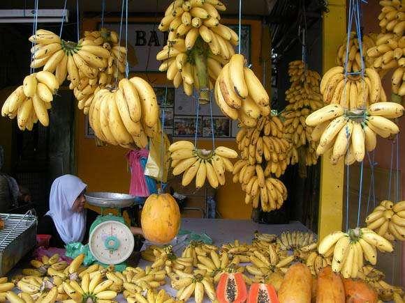 【閲覧注意】購入したバナナの中から何百匹ものクモが出現 → 自宅がクモだらけになり外へ避難 → 世界最悪の毒グモと思われることが判明 | ロケットニュース24