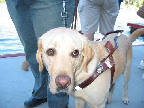 もし目の前で盲導犬が傷付けられていたら?どうすべきか弁護士に聞いてみた