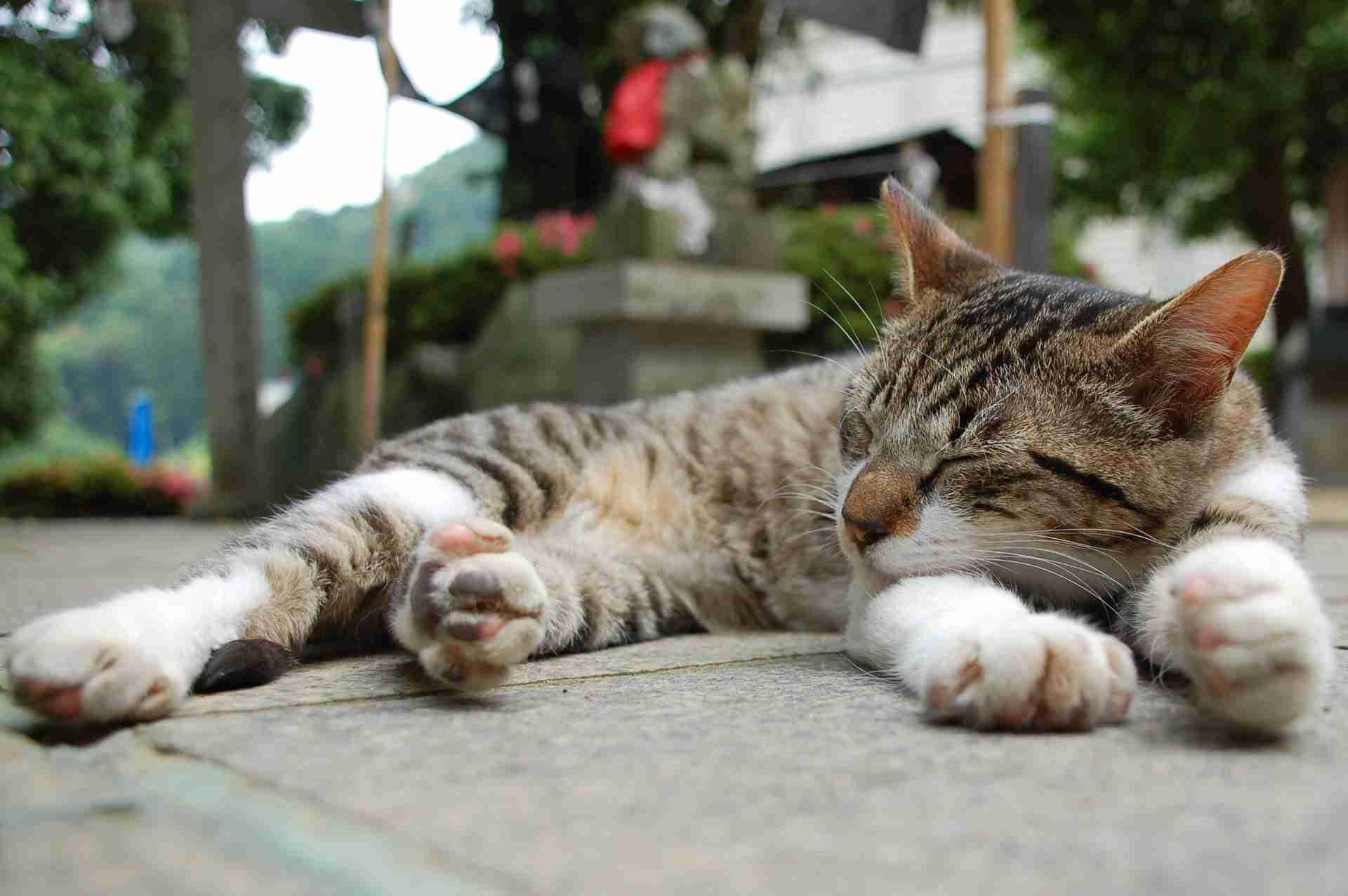 """猫50匹殺し逮捕の自称""""愛猫家"""" 自宅では猫一匹飼っていた"""