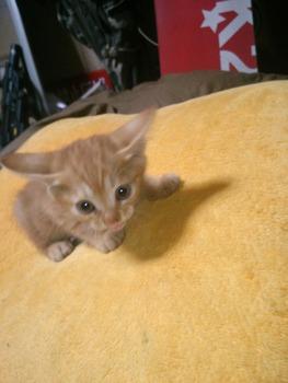 【画像】親猫に捨てられて鳴いてた子猫捕獲して2時間たった結果wwwwwwwwww [2chまとめ]