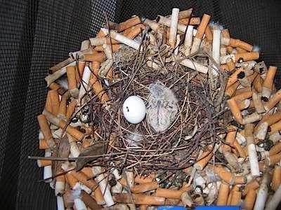 お子様のいる喫煙者の方