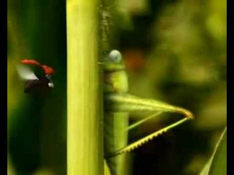 Minuscule Catapult grasshopper.mkv - YouTube
