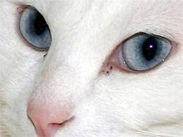 神戸のマンションで両目がえぐり取られ、片方が口の中に入れられた猫の死骸