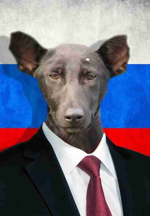 【完全に一致】唐揚げ、プーチン大統領、ジャバ・ザ・ハット…いろんなモノや人に激似なそっくりワンコたち
