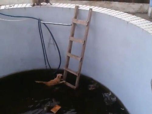「猫がプールに落ちて脱出できない!」→救出しようとハシゴを降ろした結果w