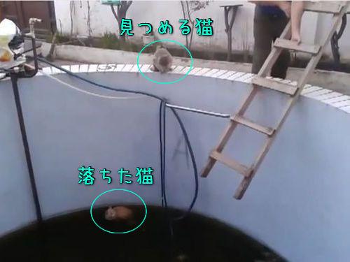 「猫がプールに落ちて脱出できない!」→ハシゴを降ろして救出作戦…「あれ?予想してたのと違う」(動画):らばQ