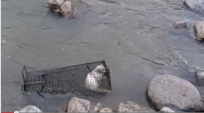 「猫を川に沈めにいく」動画をニコニコ生中継「虐待絶対許せない」と批判殺到
