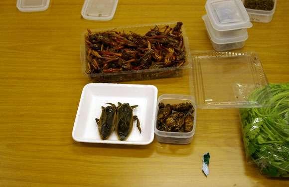 食料危機の打開策に昆虫食 / EU圏では近々スーパーでも販売開始 | ロケットニュース24