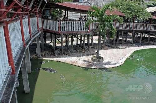 【タイ】女性がワニ飼育池に飛び込み自殺