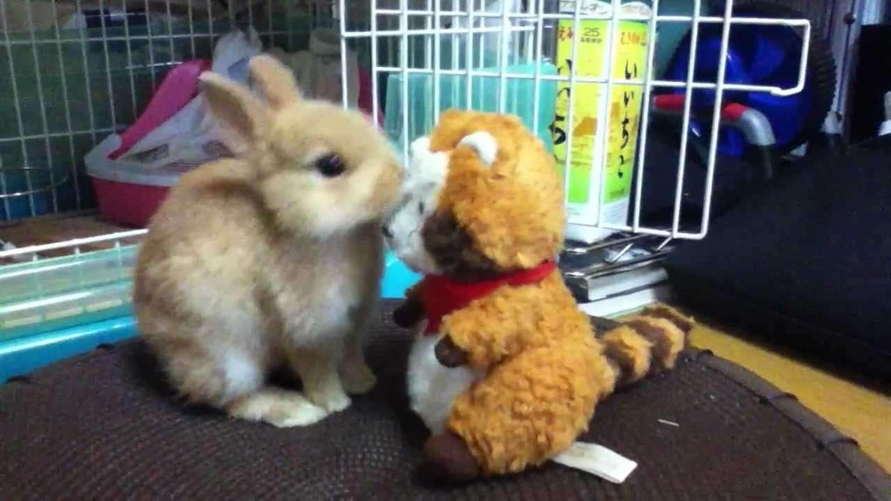 ネザーランドドワーフとラスカル(飼育5日目) - YouTube