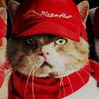 ピザハットが猫の手を借りてピザキャット店オープンwww