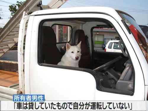 車持ってない人〜!