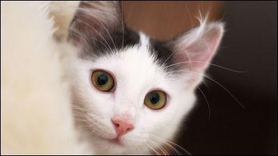 ネコ好きを世界中で増やして爆速拡散していったおそるべき23匹のネコ - GIGAZINE
