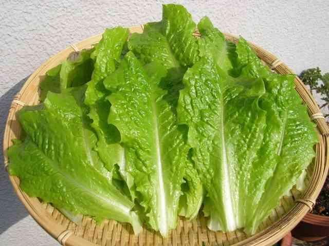 野菜が高い時のお助けレシピ!