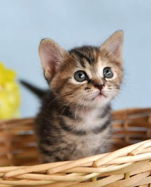 【沖縄】保育所の芝生に子猫の切断死骸