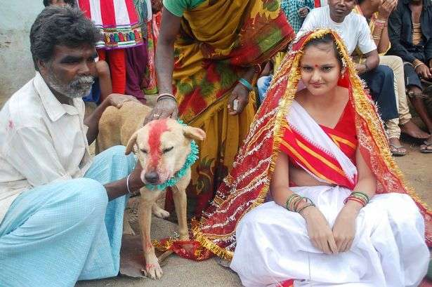 アメナマ!オカルト速報 | 18歳女性が犬と結婚させられる…インド