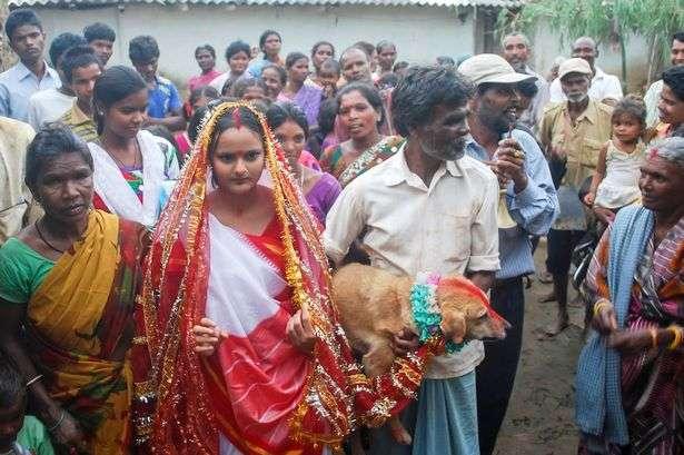 18歳女性が犬と結婚させられる…インド