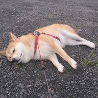 最近の犬のゆとり化がヤバイんだけどwww - NAVER まとめ