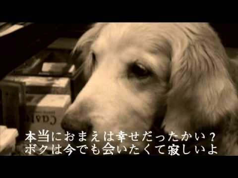 犬のうた 〜ありがとう〜 フォトトレイラー 歌詞有り - YouTube