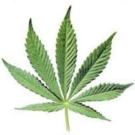 海外で「大麻合法化」が広がる