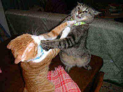 彼氏、旦那と喧嘩中の方いますか?