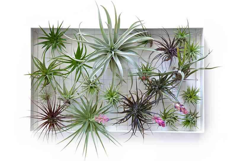 植物をすぐ枯らしてしまう人?