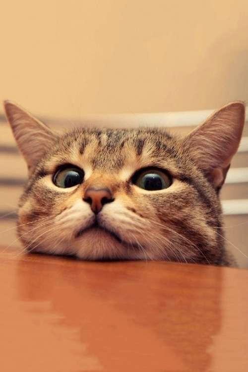 猫の口についてるω、実は正式名称があった