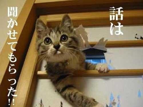 野良猫にエサをあげる事についてどう思いますか