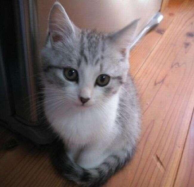 子猫ちゃん3|ブログのタイトルを入力します。