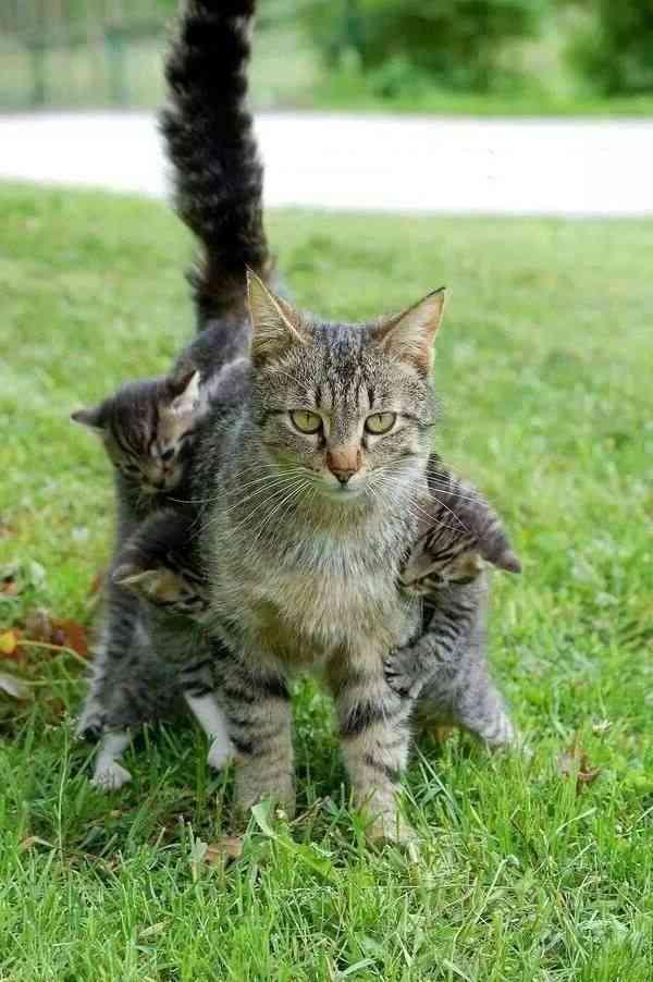 申し訳無さそうにご飯を催促しに来る母猫の表情www