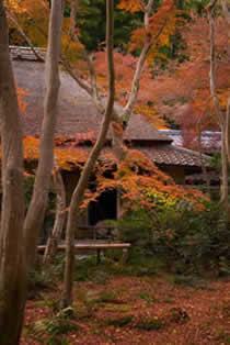祇王寺〜地図・アクセス・写真など観光情報:京都パーフェクトガイド
