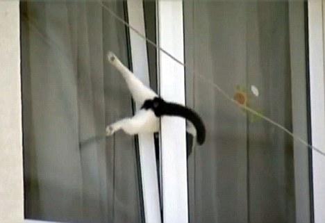 ドジって気まずい感じの猫の表情ww