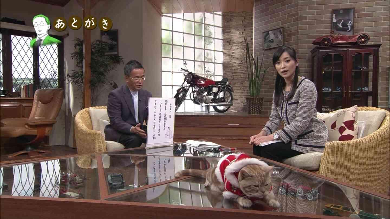 テレ東のニュース番組のアイドル猫「まーご」が自由すぎる