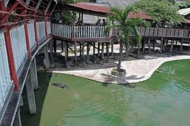 女性がワニ飼育池に飛び込み自殺、タイ 写真1枚 国際ニュース:AFPBB News