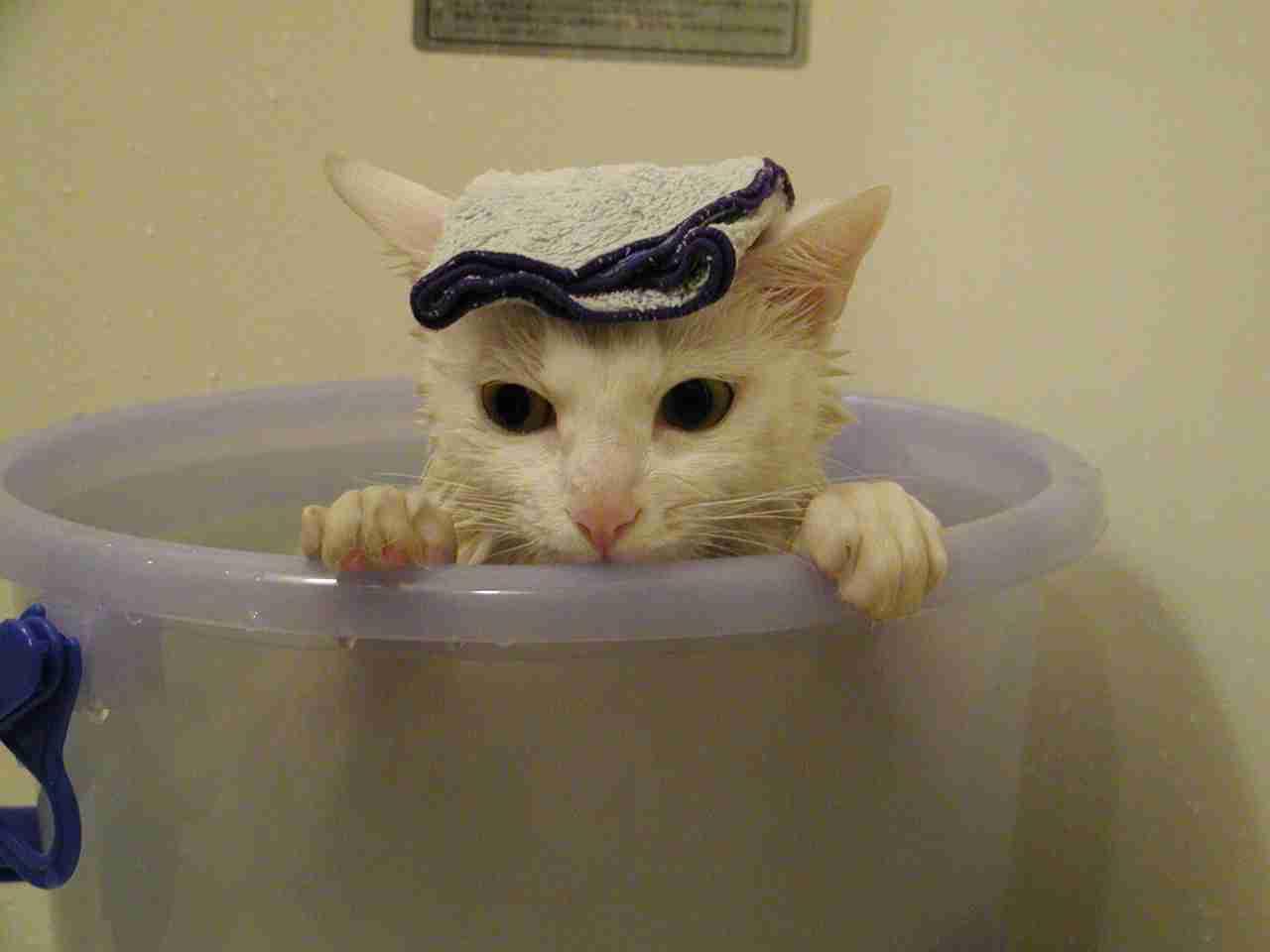 猫の上手な洗い方