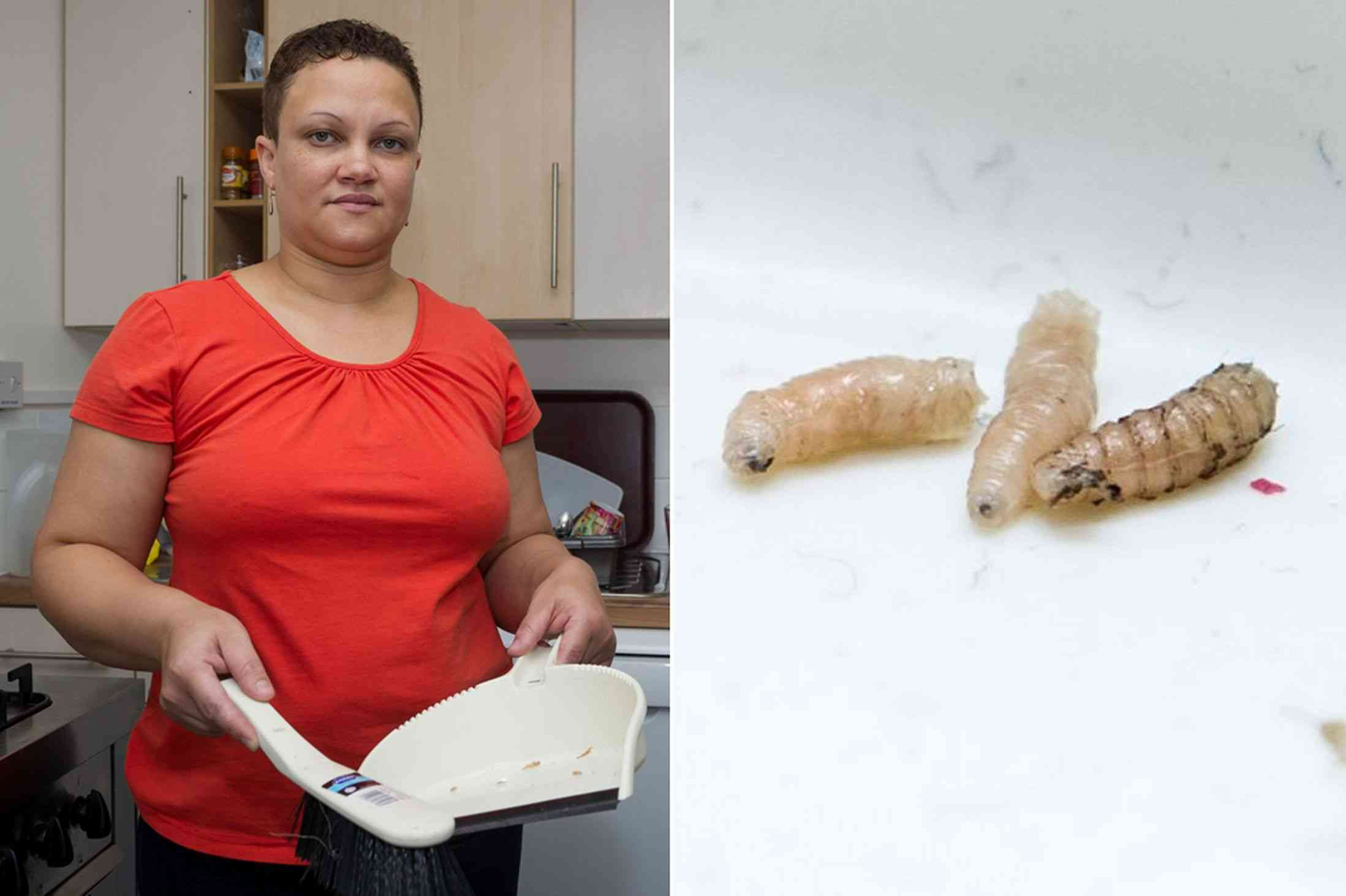 Mum's disgust as she finds maggots in her kitchen came from CORPSE rotting in upstairs flat - Mirror Online