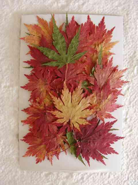 秋にやってみたいこと!