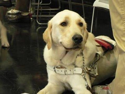 【感動】豹変した盲導犬 - YouTube