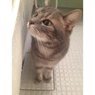 なぜ猫は人間の入浴シーンをのぞくのか | マイナビニュース