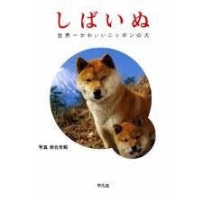 柴犬好きの方!!