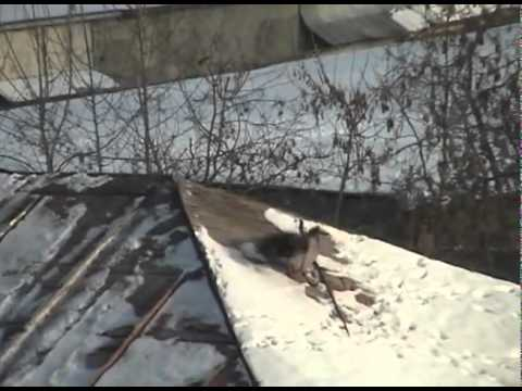 Russian Crow Rooftop Snowboarding - YouTube