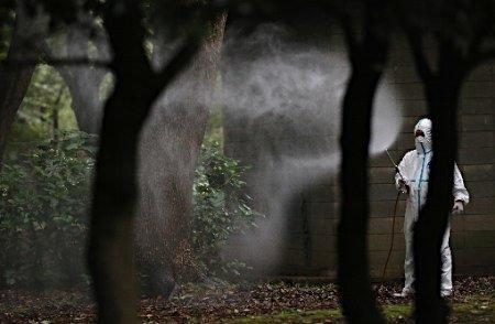 代々木公園で採取の蚊からデング熱ウイルスみつかる→当面封鎖へ
