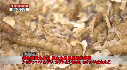 韓国政府が国策で昆虫を食用認定 2020年までに7000億ウォン規模産業に ガジェット通信