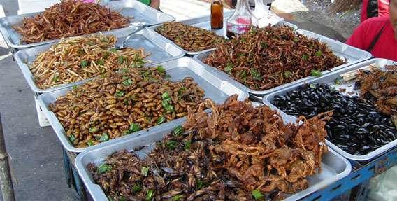 世界の食用昆虫、人気ベスト8(昆虫注意) : カラパイア