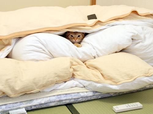 寝具(布団、マットレス等)、何を使ってますか?