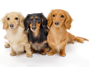 「噛まれて腹が立った」 金属の棒で従業員がたたく 神奈川県動物保護センターの犬死ぬ