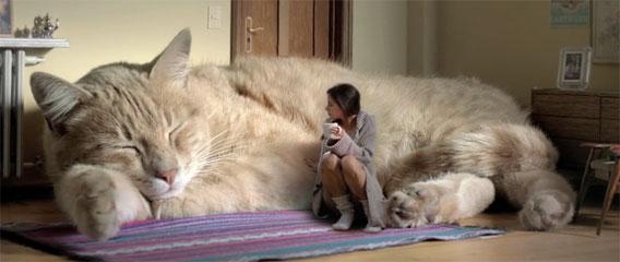 "Googleマップに""巨大猫""出現、Google側も存在認め「調査中」"
