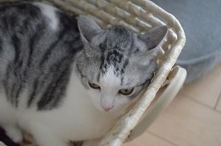猫が出す「僕、おまえのこと嫌い」のサイン | マイナビニュース