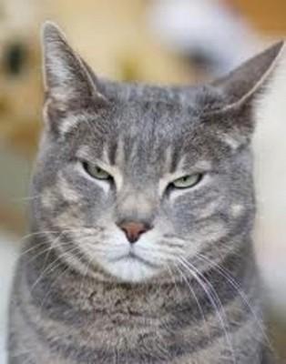 猫が出す「僕、おまえのこと嫌い」のサイン