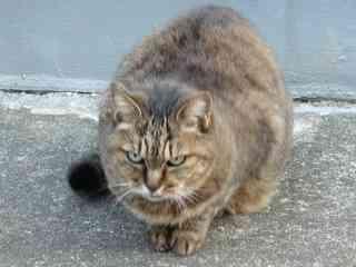 ネコに嫌われる人には「ある行動」が共通していた!